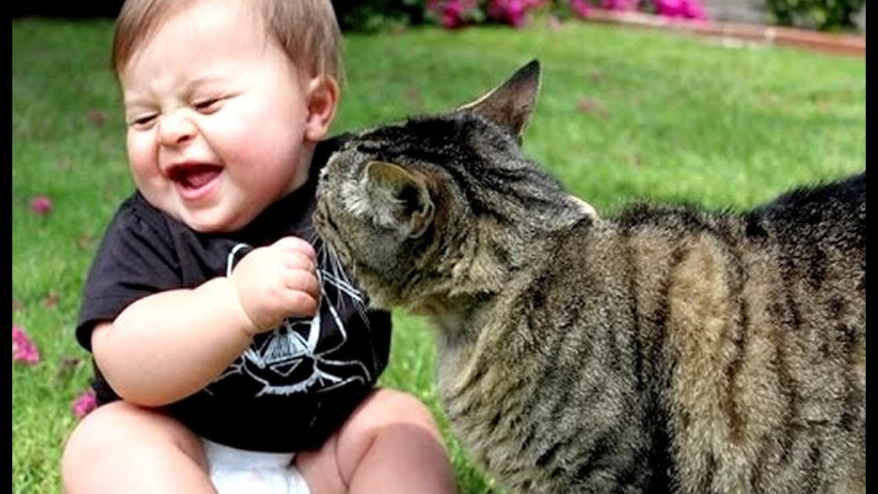 Funny cats and babies playing together – Best video Compilation
