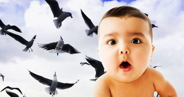 24 Baby Names That Are For The Birds … Or At Least Inspired By Them