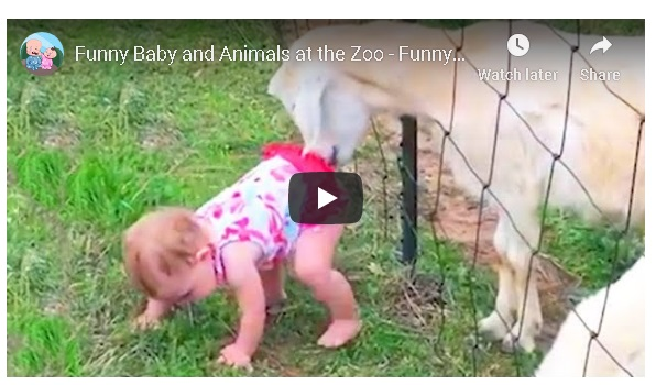Funny Baby and Animals at the Zoo!!!
